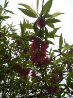 hefei_flower_tree_05