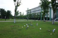 south_campus_1_doves_summer_2017_2