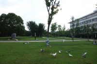 south_campus_1_doves_summer_2017_3