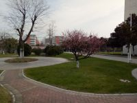 south_campus_1_early_spring_tree