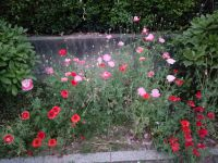 south_campus_1_evening_summer_flowers_2