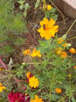 south_campus_1_flowers_atumn_2017_03
