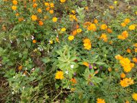 south_campus_1_flowers_atumn_2017_05