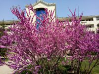 south_campus_1_flowers_spring_2019_3