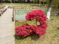 south_campus_1_flowers_spring_2019_6