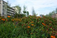 south_campus_1_flowers_summer_2017