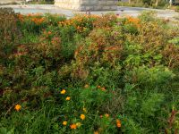 south_campus_1_flowers_summer_2017_12