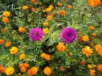 south_campus_1_flowers_summer_2017_13