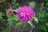 south_campus_1_flowers_summer_2017_2