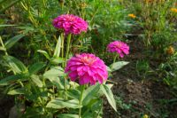 south_campus_1_flowers_summer_2017_6