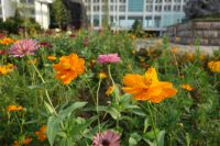south_campus_1_flowers_summer_2017_7