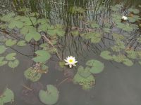 south_campus_1_lake_seaflower_atumn_2017_1