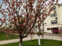 south_campus_1_spring_flower_tree_06