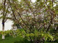 south_campus_1_spring_flower_tree_07