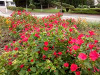 south_campus_1_summer_flowers_1