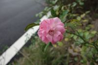south_campus_2_autumn_flower_1