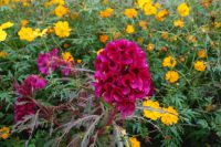 south_campus_2_autumn_flowers_10