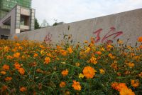 south_campus_2_autumn_flowers_11