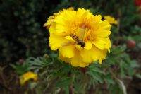 south_campus_2_autumn_flowers_4