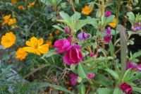 south_campus_2_autumn_flowers_8