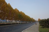 south_campus_2_autumn_roard_towards_north_gate_2