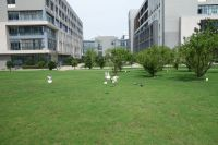 south_campus_2_doves_near_building_36_summer_2017_1
