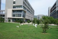 south_campus_2_doves_near_building_36_summer_2017_2