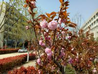 south_campus_2_flowers_spring_2019_11