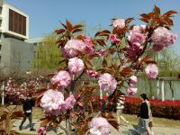 south_campus_2_flowers_spring_2019_12