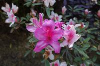 south_campus_2_flowers_spring_2019_14