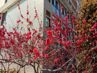 south_campus_2_flowers_spring_2019_7