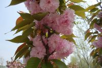 south_campus_2_spring_2020_flowers_29
