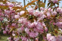south_campus_2_spring_2020_flowers_30