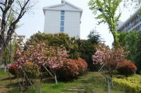 south_campus_2_spring_2020_greenery_10