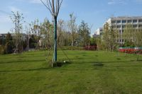 south_campus_2_spring_2020_greenery_15