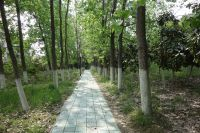 south_campus_2_spring_2020_greenery_19