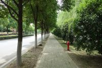 south_campus_2_spring_2020_road_11