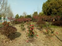 south_campus_2_spring_flowers_2021_1